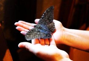 Moth-in-hands