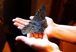 Moth-in-hands