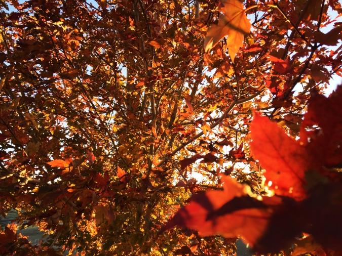 Quality of Autumn